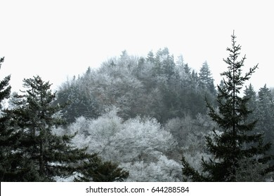 Frosty Morning on Newfound Gap Road, Great Smoky Mountains National Park