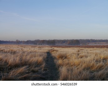 Frosty morning in RIchmond Park