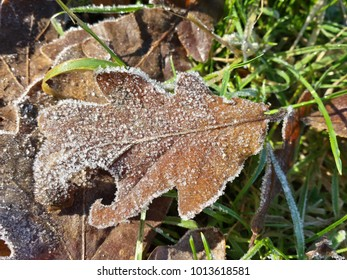 Frosty Oak Leaf Ice Crystals
