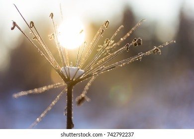 Frosty plant in the garden in winter with beautiful sunlight macro