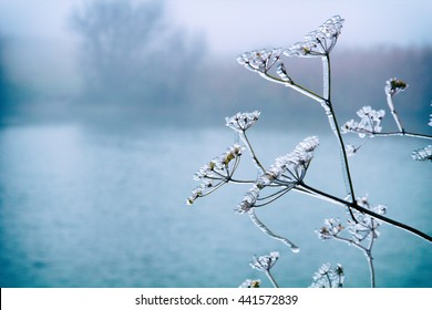 Frosty plant in winter day