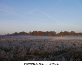 Frosty Richmond Park