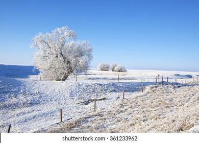 A frosty Southern Alberta prairie landscape in winter.