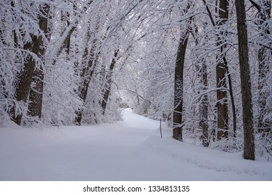 Frosty Trail in the Deep Woods