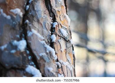 Frosty tree bark texture close up