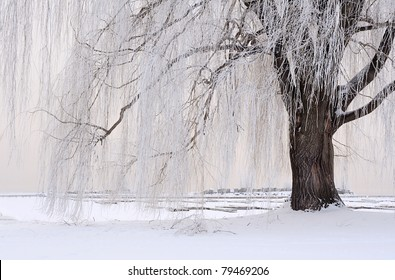 Frosty tree by the lake in winter