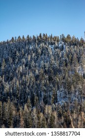Frosty tree tops on the mountain side in Vernon BC