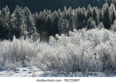 frosty trees along the Snake River, Grand Tetons NP, WY