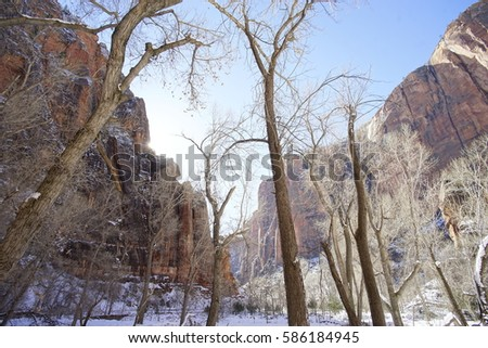 Frosty Trees in Zion National Park Utah During Wintertime