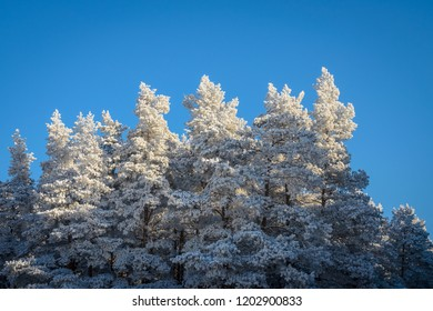 frosty winter day in the forest