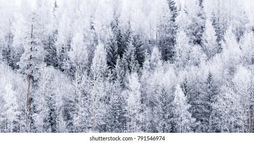 Frosty winter forestscape from Finland
