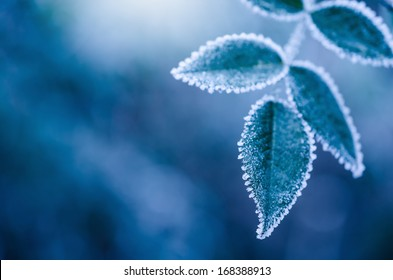 Frosty winter leaves abstract