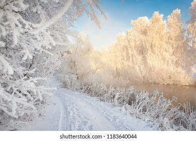 Frosty winter scene. Winter landscape in morning frost. White hoarfrost on plants and branches of trees. Christmas background. Cold snowy nature on bright sunny day. Xmas time. Natural winter scene
