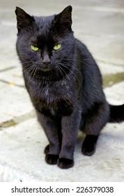 Frowning black cat closeup