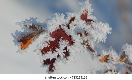 Frozen autumn leaves at white snow background
