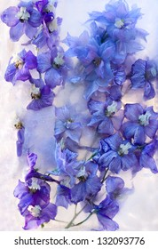 Frozen beautiful    blue delphinium  flower.  blossomsin the ice cube