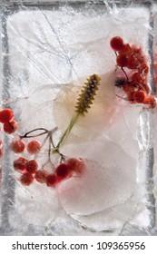 Frozen beautiful  Spathiphyllum floribundum flower.  blossomsin the ice cube