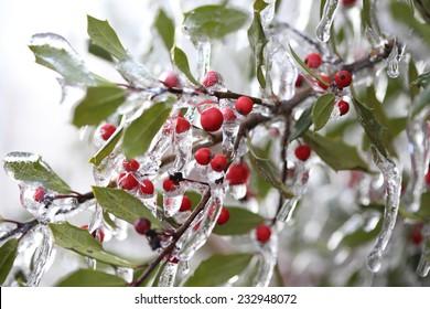 Frozen berries during freezing rain