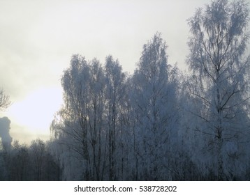 frozen birch trees winter landscape