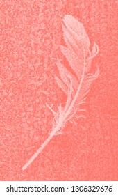 frozen bird feather closeup in a Living Coral tone