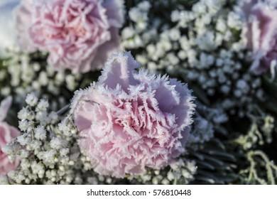 Frozen bouquet of flowers/Frozen pink flowers