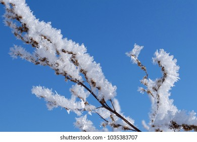 Frozen branch of a plant against a clear blue sky.