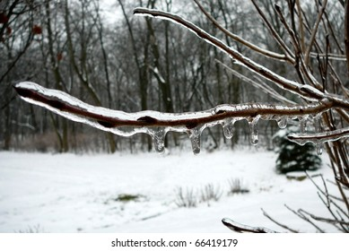Frozen Branch with Snow and Woods