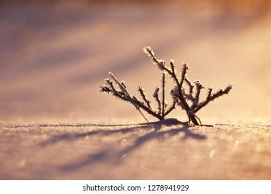 frozen branch - winter