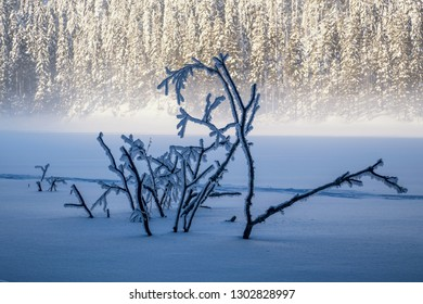 Frozen branches twinkling from the water in the middle of the lake