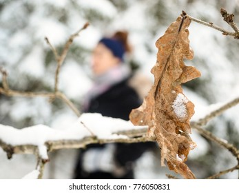 Frozen brown oak leaf at winter with snow and a feamle person walking by in background