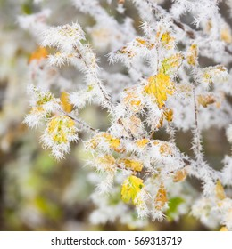 Frozen bush leaves at cold autumn day