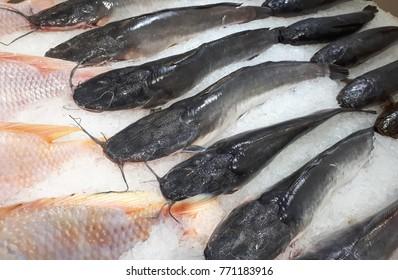 Frozen catfish on ice stall