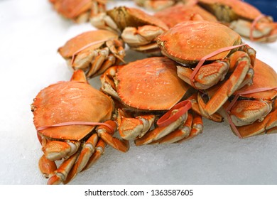 Frozen cooked red crab on the ice for sale