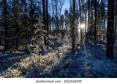 frozen country side by the forest covered with snow
