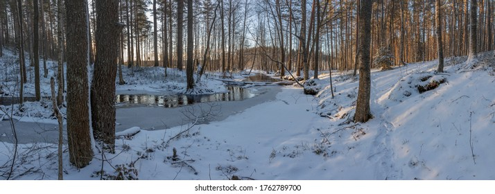 A frozen creek in a winter forest. Panorama. Winter landscape