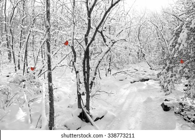 Frozen Creek in Woods With Snow - Red Cardinals Added  This is designed especially for holiday use - Christmas, Season's Greetings and Happy Holidays