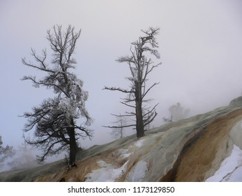 Frozen dead trees against the sky - Yellowstone National Park, USA