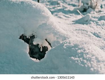 Frozen drop on branches in snowdrift background