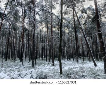 Frozen Dutc forest