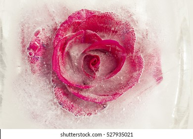 frozen flora - bright red rose frozen into a block of ice