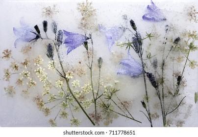 Frozen flowers, daylight
