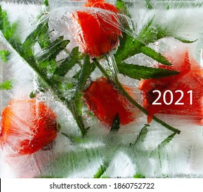 Frozen flowers, postcard for the New Year 2021, flowers in an ice cube, copy space for text.