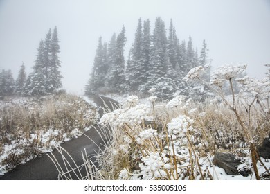 Frozen flowers and trees on the top of Glacier National Park, Montana