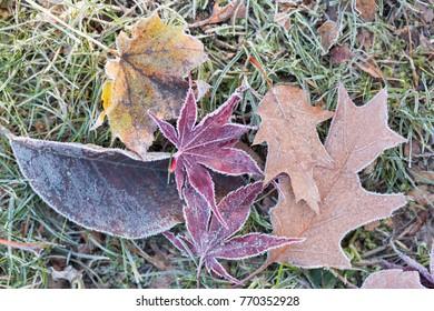 frozen foliage on a meadow