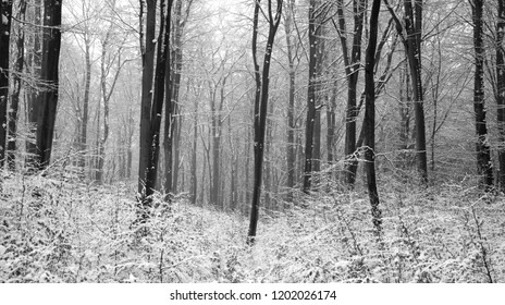Frozen forest in February. - Shutterstock ID 1202026174