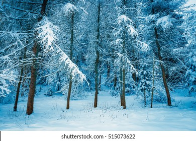 frozen forest with snow, winter landscape
