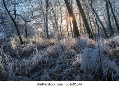 frozen forest in sunset