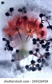 Frozen  fresh beautiful   flower of   geranium  and air bubbles in the ice  cube