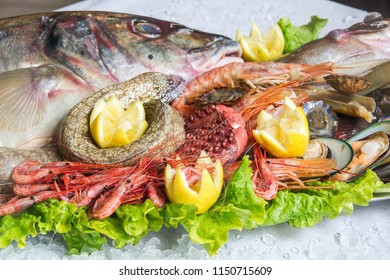 frozen fresh fish and seafood