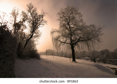 frozen garden with a weeping willow with soft sunlight.